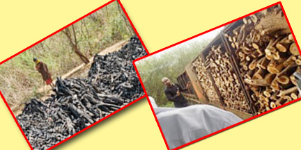 Charcoal production not by occurring deforestation